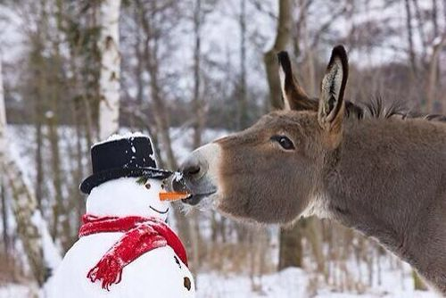 Snowman and donkey