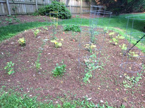 Garden Update 1 June 2014